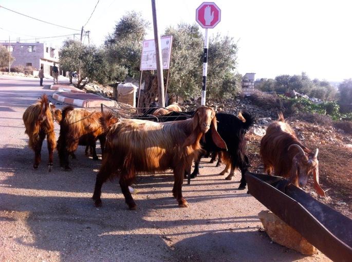 goats_contact_mini