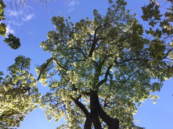 tree_upside_down