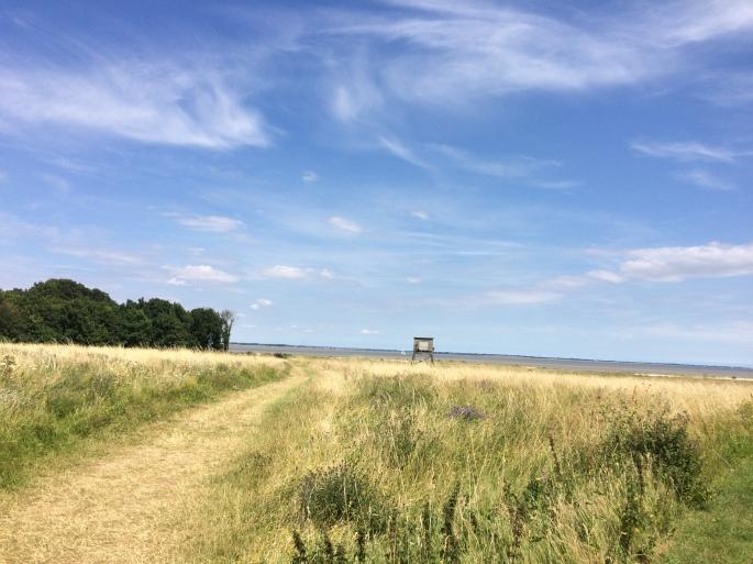 Marsh_ride