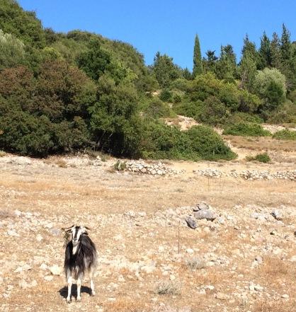 Goat_hike